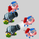 Circus performance gun shoots a pig. Cartoon style Royalty Free Stock Images