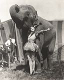 Circus performer posing with elephant Royalty Free Stock Photos