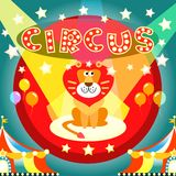 Circus poster. Lion on the circus arena poster vector illustration template Stock Photos