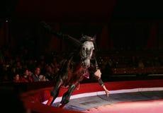 Circus rider during performance Stock Photos