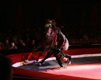 Circus rider during performance Royalty Free Stock Photography