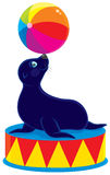 Circus sea bear stock illustration