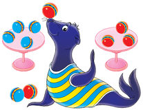 Circus seal Stock Photo