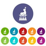 Circus seal with a ball set icons Stock Images