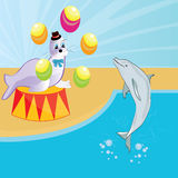 Circus. Seal and dolphin show at the circus baby beautiful illustration Stock Photos