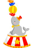Circus Seal Stock Image