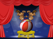 A circus show with the beavers Stock Images
