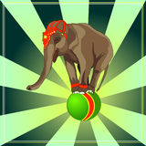 Circus show. Elephant on the ball. Trained animals. Vector. Stock Image