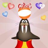 Circus show Stock Photo