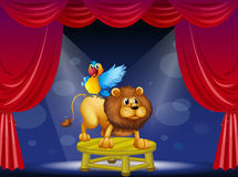 A circus showing the lion and the parrot Royalty Free Stock Photography