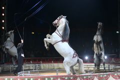 Circus spectacle Royalty Free Stock Photography