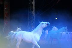 Circus spectacle Stock Photo