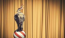 Circus in stad Royalty-vrije Stock Fotografie
