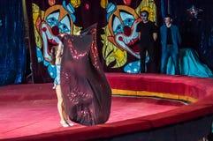 Circus Stars perform focus dress ups Stock Photos