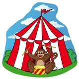 Circus tent with monkey Stock Photo