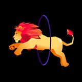 Circus trained wild animals performance. gradient lion jumps over the ring in the fire.  Royalty Free Stock Images