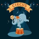 Circusolifant Stock Fotografie