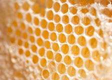 Cire d'abeille photo stock