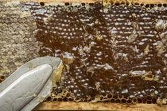 Cire d'abeille enlevée par apiculteur Photo libre de droits