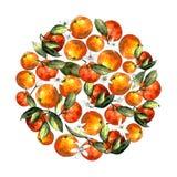 Cirkel av tangerin, sidor och blommor på en vit bakgrund Teckningsmarkörer vektor illustrationer