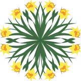 Cirkel från den gula pingstliljan - vektorillustration Arkivbilder