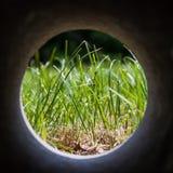 Cirkel inramade gräs Fotografering för Bildbyråer