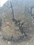 Cirkel runt om journalen Royaltyfri Foto