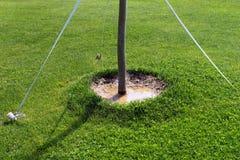 Cirkel runt om trädstammen på en gräsmatta, når att ha bevattnat Arkivfoto