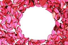 Cirkel tekstruimte royalty-vrije stock foto's