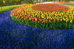 Cirkel of tulips Stock Photo