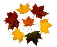 Cirkel van kleurrijke esdoornbladeren op witte achtergrond Royalty-vrije Stock Foto