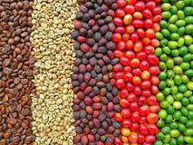 Cirkel van Koffie Beens stock afbeeldingen