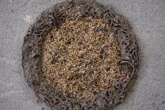 Cirkel van termietheuvel Royalty-vrije Stock Afbeeldingen