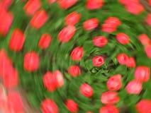 Cirkel van tulpen Stock Afbeelding