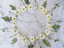 Cirkelkader van de zomerbloemen Stock Afbeelding