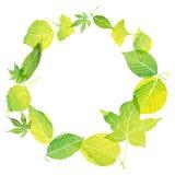 Cirkelkader van groene bladeren Royalty-vrije Stock Afbeeldingen