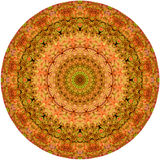 Cirkellongissimasamenvatting 1 van vormecheveria Stock Foto's