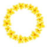 cirkeln blommar frangipanien Royaltyfria Foton