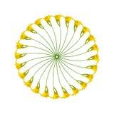Cirkelpatroon van Hemerocallis-bloemen royalty-vrije illustratie