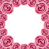 Cirkelrosa färger Rose Frame Arkivbilder