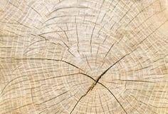 Cirkels op een boomstomp, houten textuur Royalty-vrije Stock Afbeeldingen