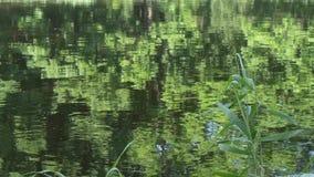 Cirkels op het water bij het bosmeer stock video
