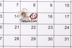 Cirkla datumplanl?ggningen av havandeskapkalendern royaltyfri bild