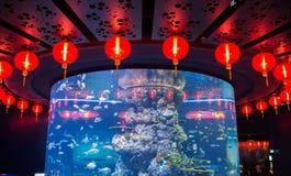 Cirkla kinesiska sfäriska röda lyktor runt om ett stort akvarium, Singapore Fotografering för Bildbyråer