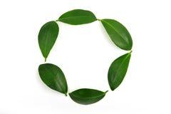 cirkla leafen royaltyfria foton