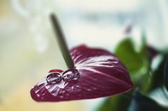 Cirklar av bruden och brudgummen på blommaanthuriumen royaltyfri fotografi
