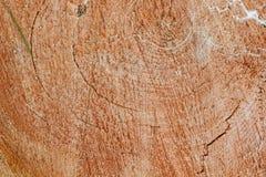 Cirklar på den gamla torkade-upp stubben En del Royaltyfri Foto