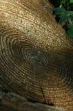 Cirklar på en trädstubbe Arkivfoton