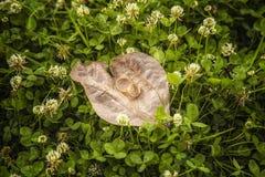 Cirklar på ett blad Arkivfoto