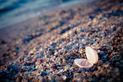 cirklar shell två som gifta sig Royaltyfria Foton